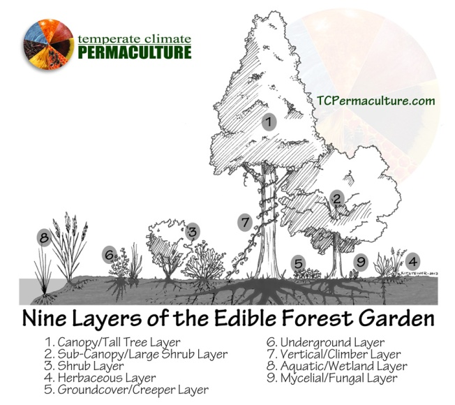Image Credit goes to John Kitsteiner of Temperate Climate Permaculture.